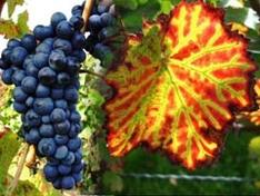 Weinreisen in der Slowakei
